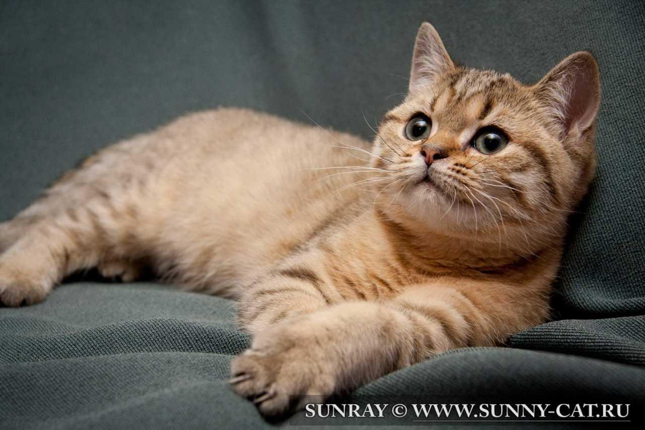Купить Капли от блох и клещей для кошек Барс - цена