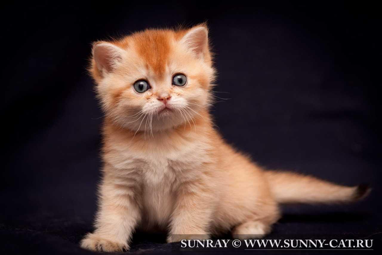 Котенок по имени Miriel Magic SunRay