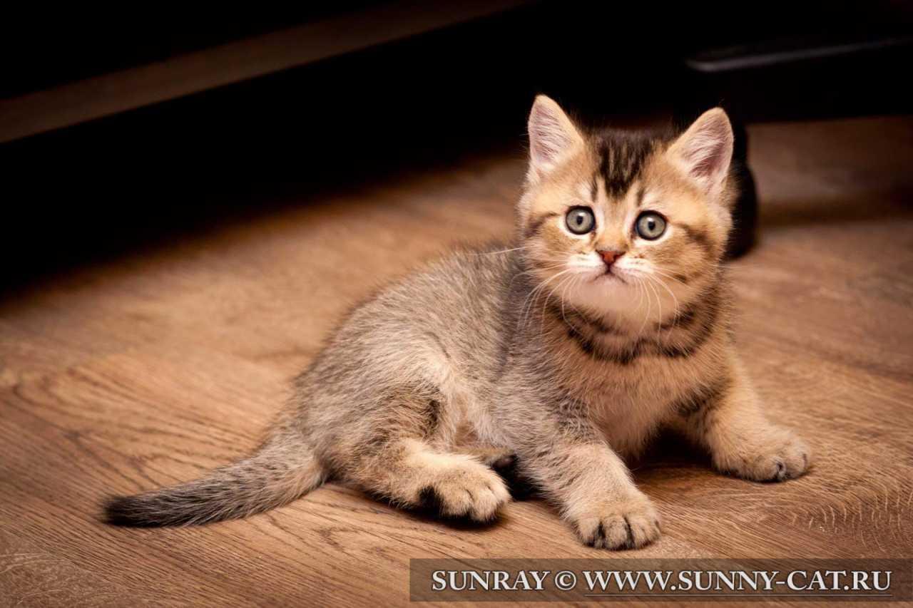 Котенок в новом доме, с чего начать?