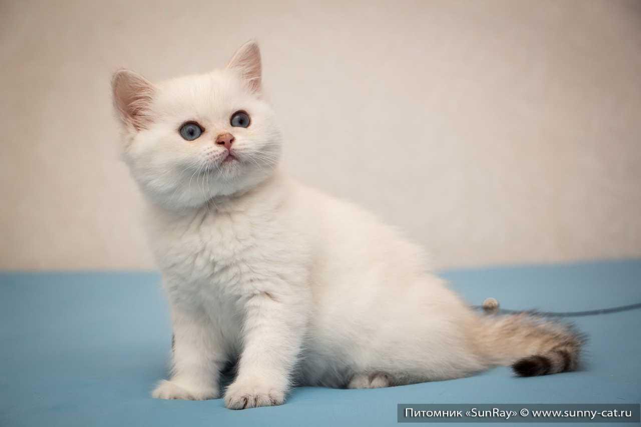 Купить диетический корм Purina Veterinary для кошек в
