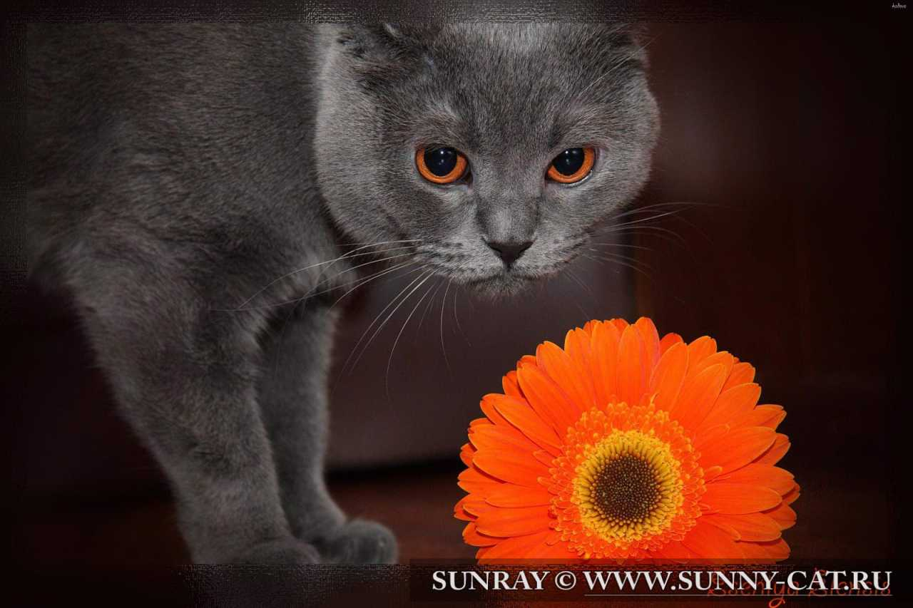 Кошка по имени Есения Еленсис