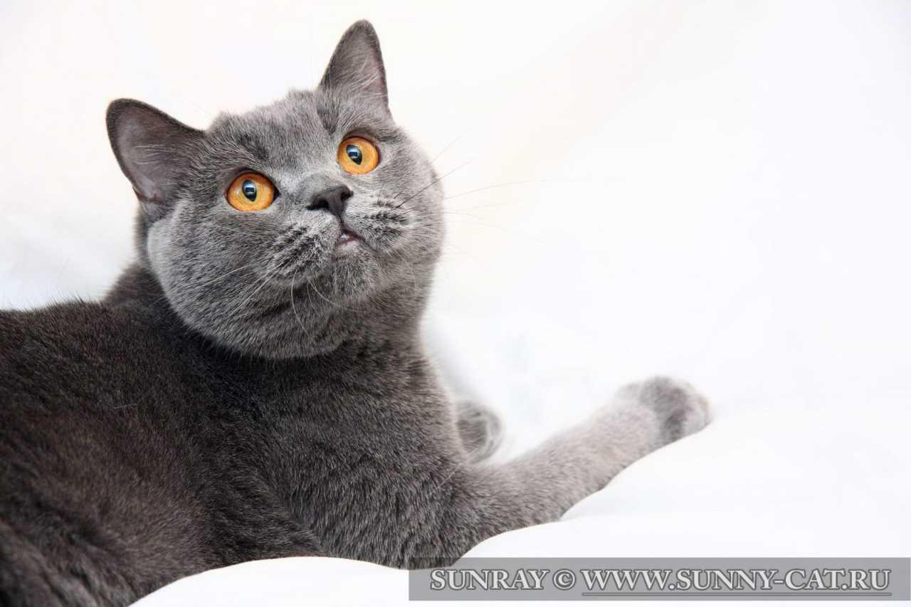 Корма для кошек 1st Choice - zoorim