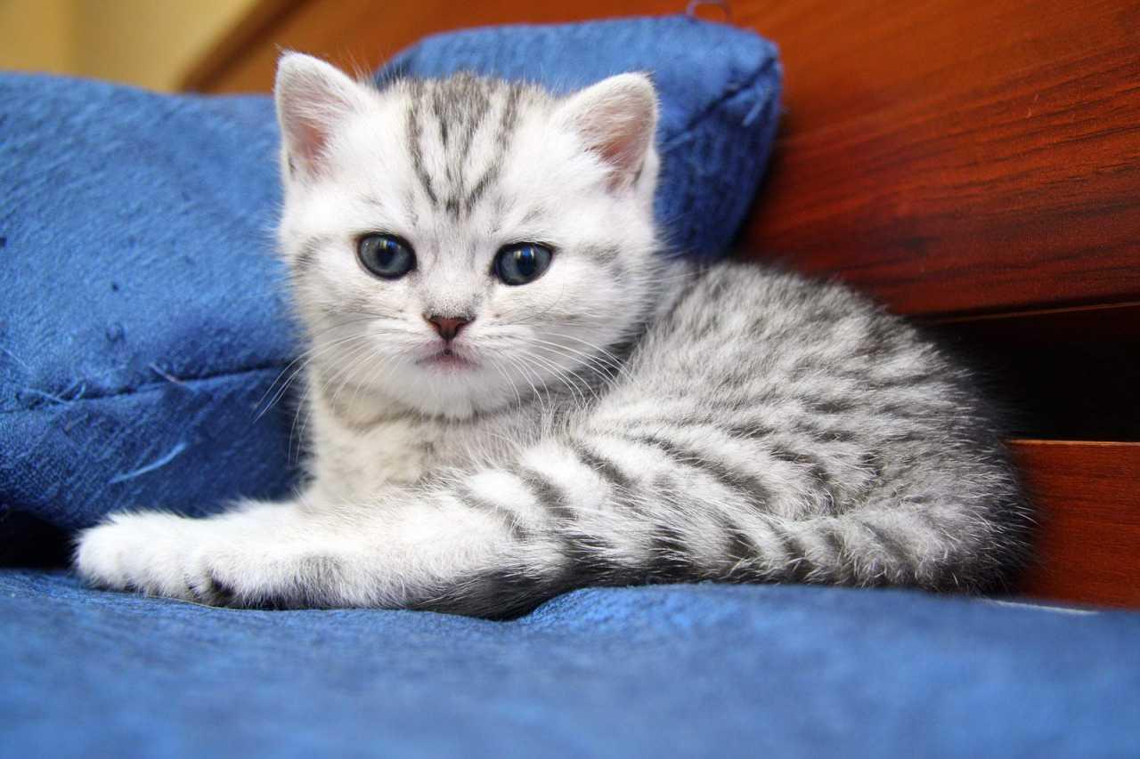 Светлые котята фото