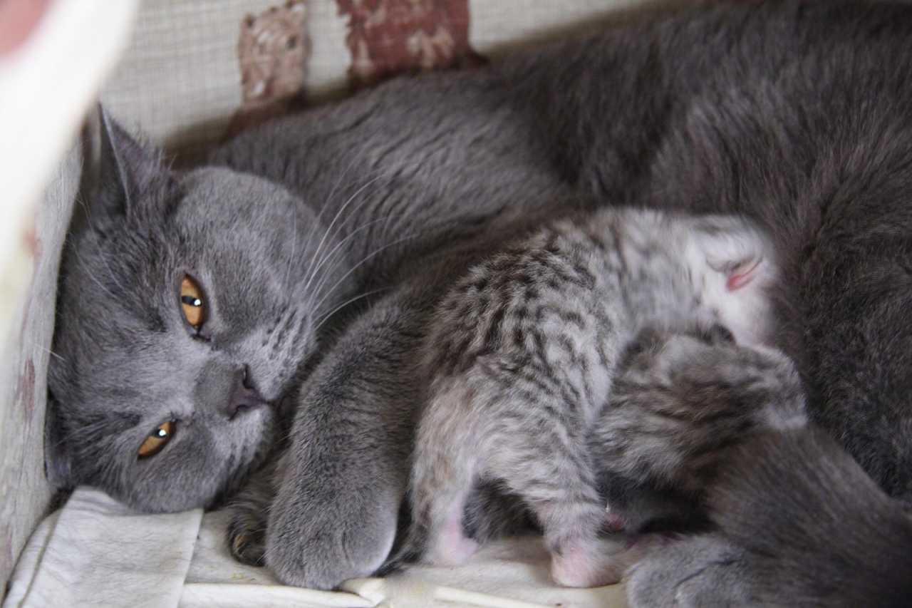 Как лечить понос у котенка 88