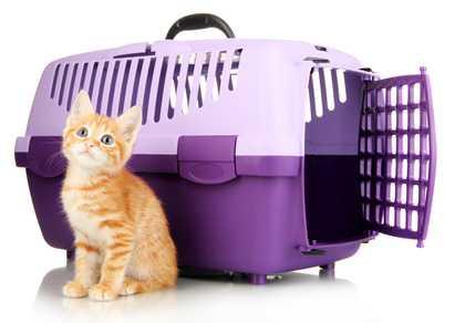 Перевозка кота из казахстана