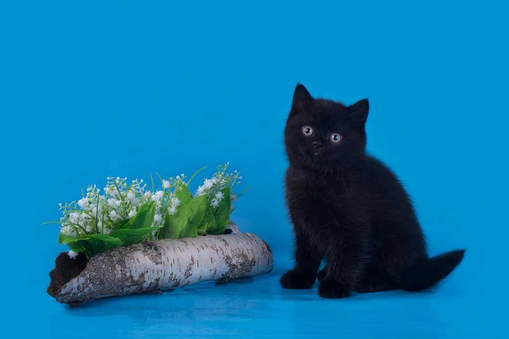 Имена котов мальчиков м