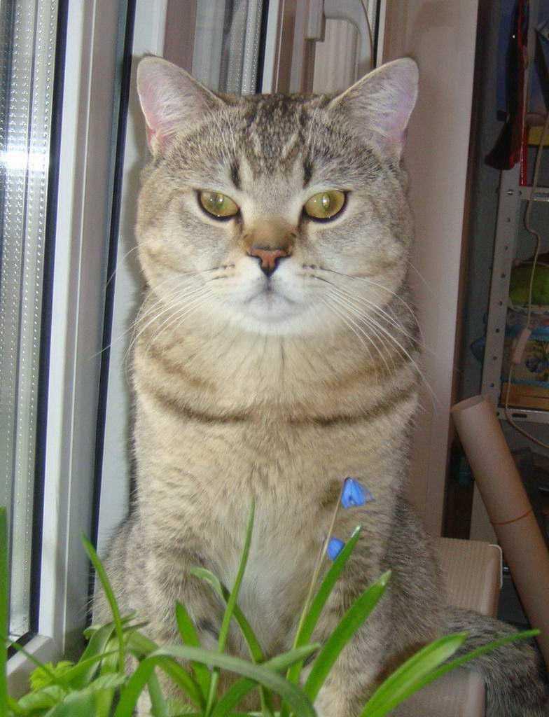 http://www.sunny-cat.ru/datas/bigthumbs/645-dsc05723b.jpg