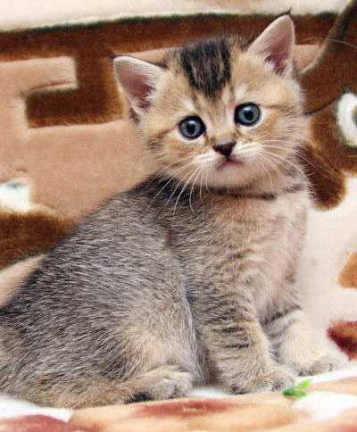 Что нужно чтобы купить кота
