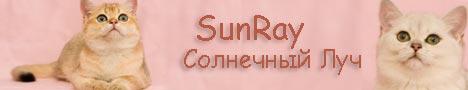 Питомник британских короткошерстных кошек классических и редких окрасов SunRay