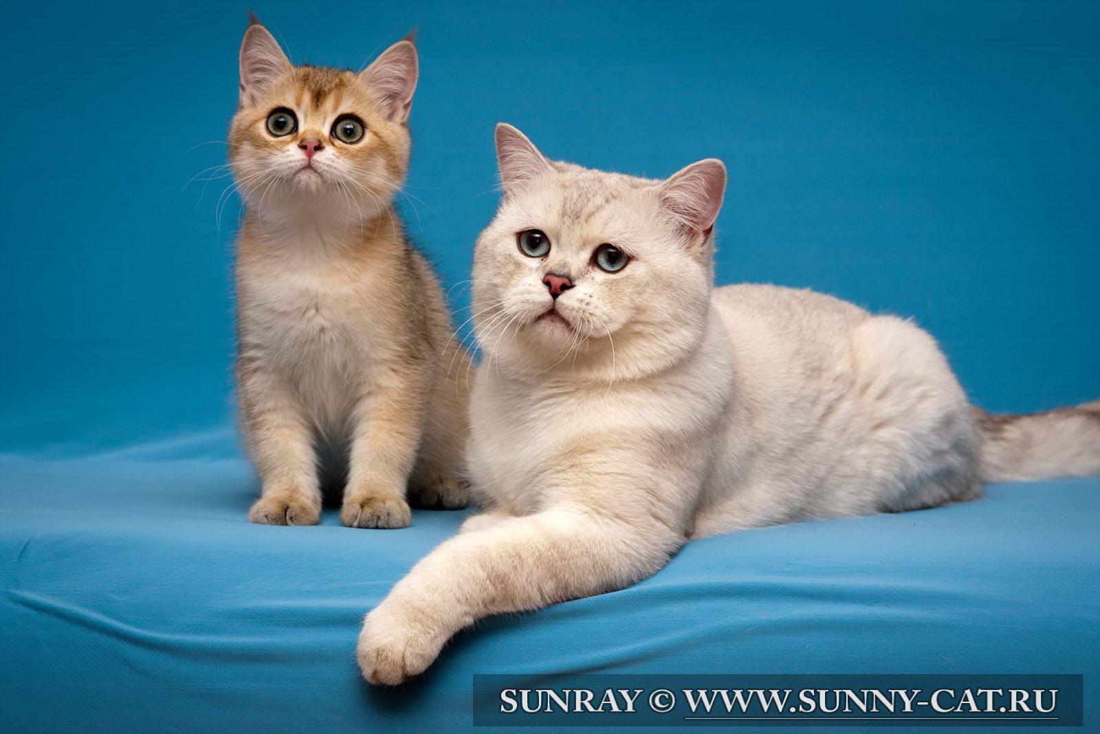 Имена для котов мальчиков полосатых