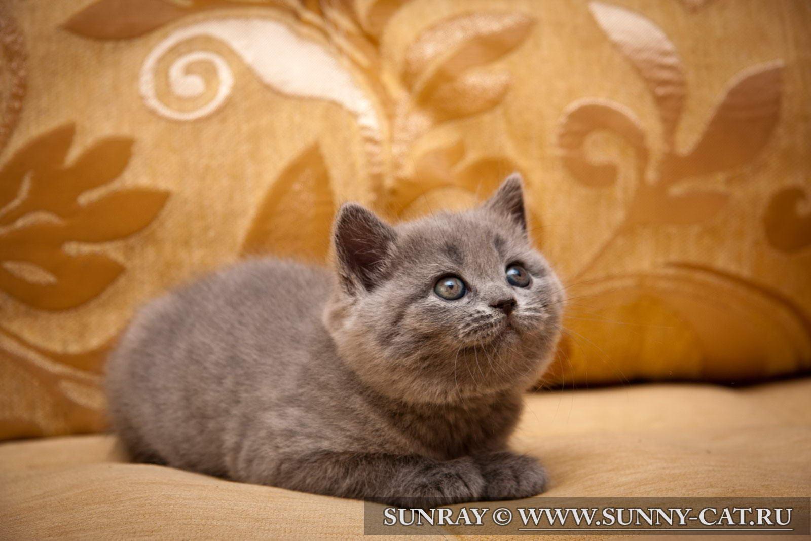 котята в воронеже с фото недорого