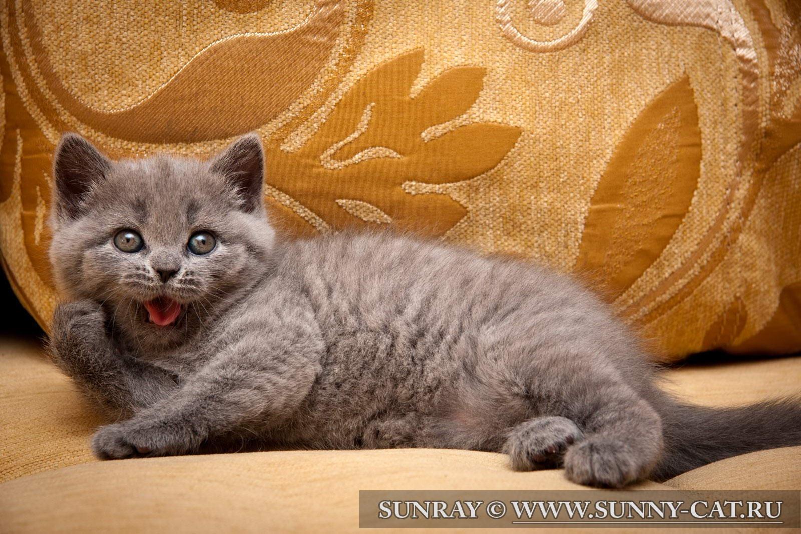 Имя для котёнка мальчика чёрного цвета