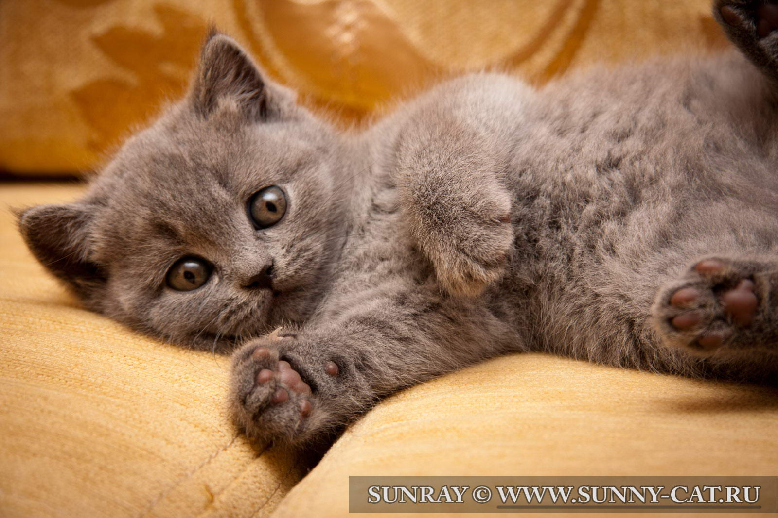 Английский кот из мультика