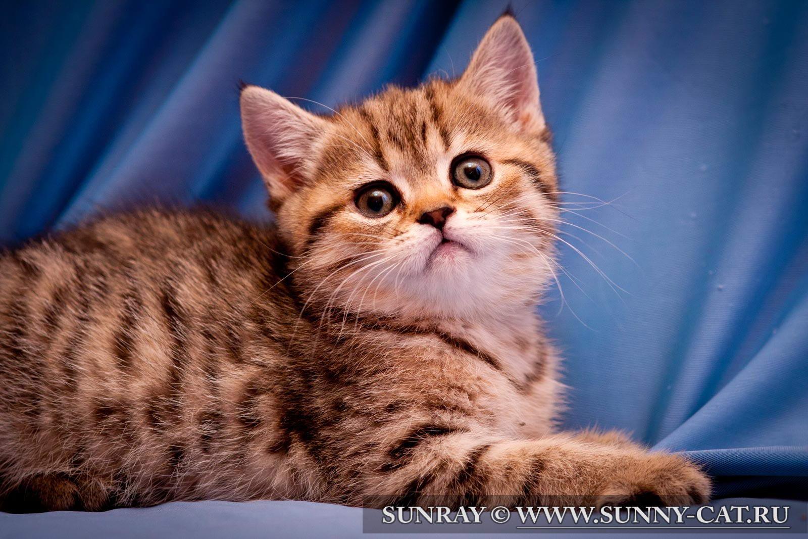 Клички имена для котов, кошек и котят