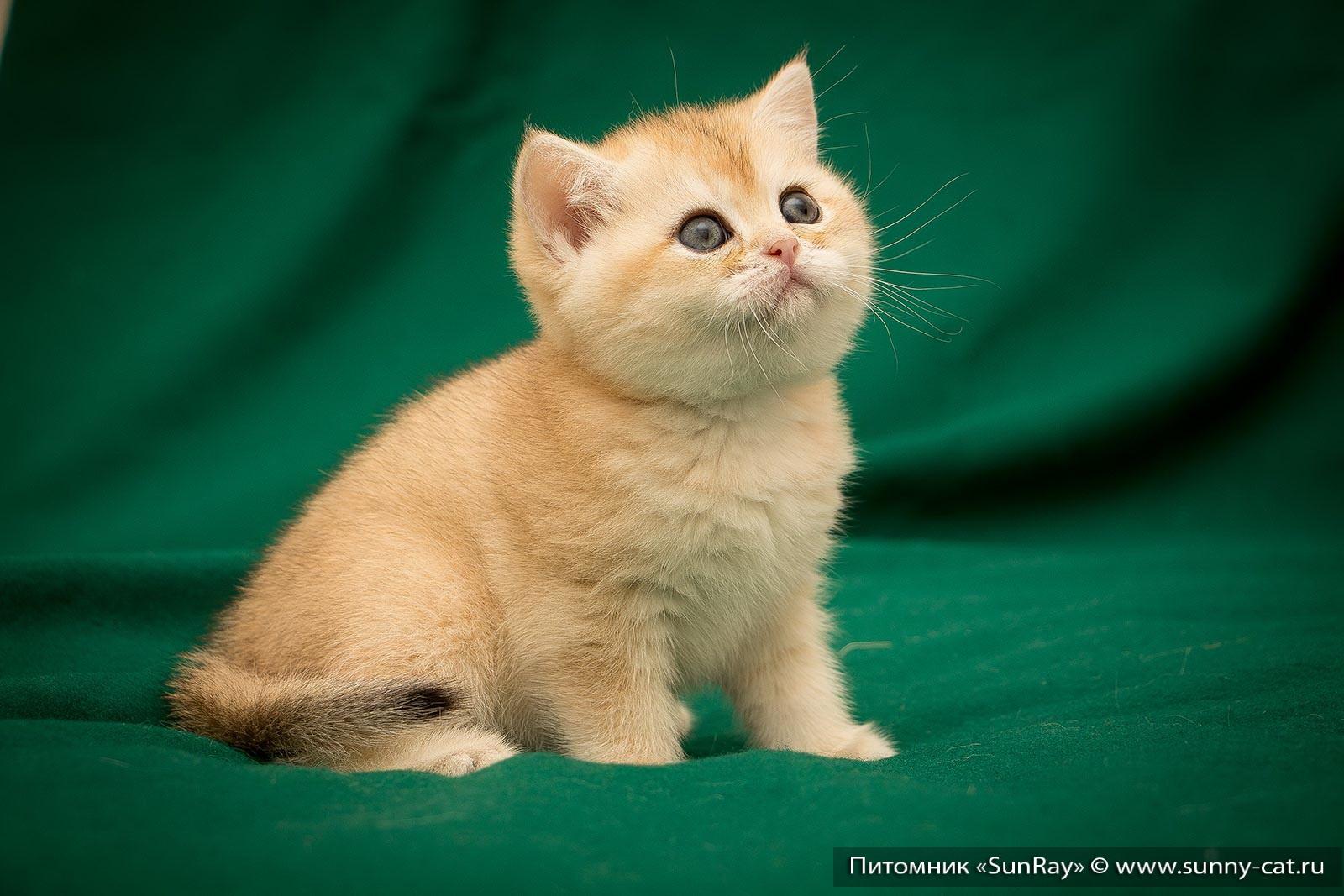 Имена кота на букву г