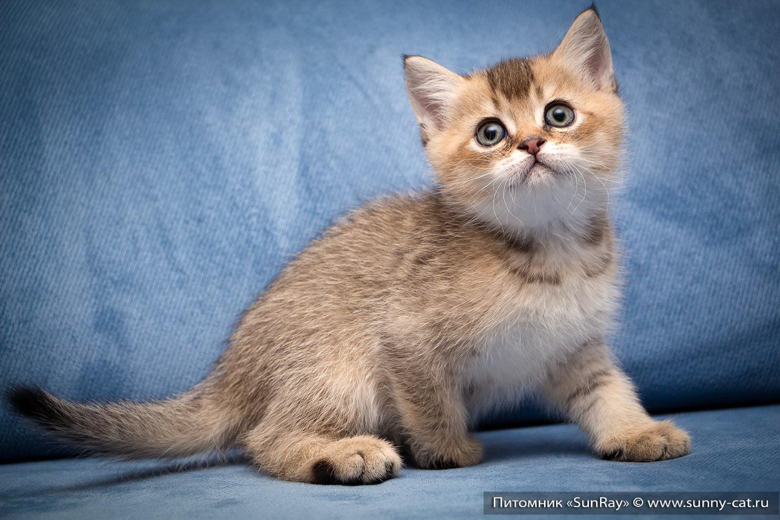 Правильный рацион для вашей кошки: с чего начать? –