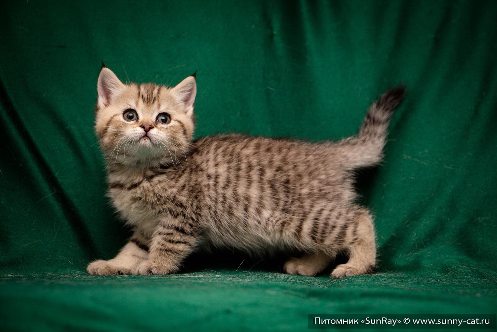 Имена для котов тигровых