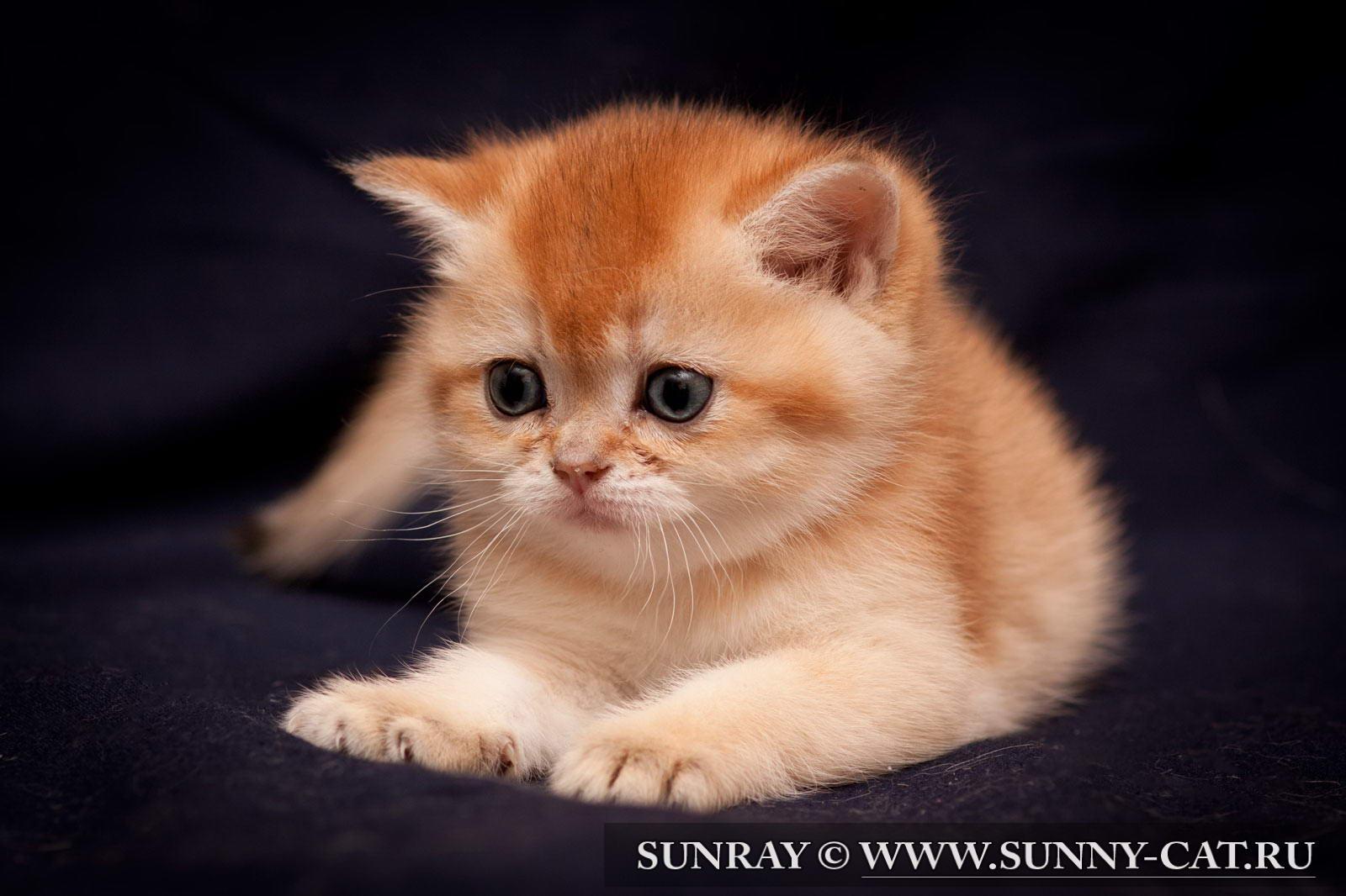 рыжих кошек и котят