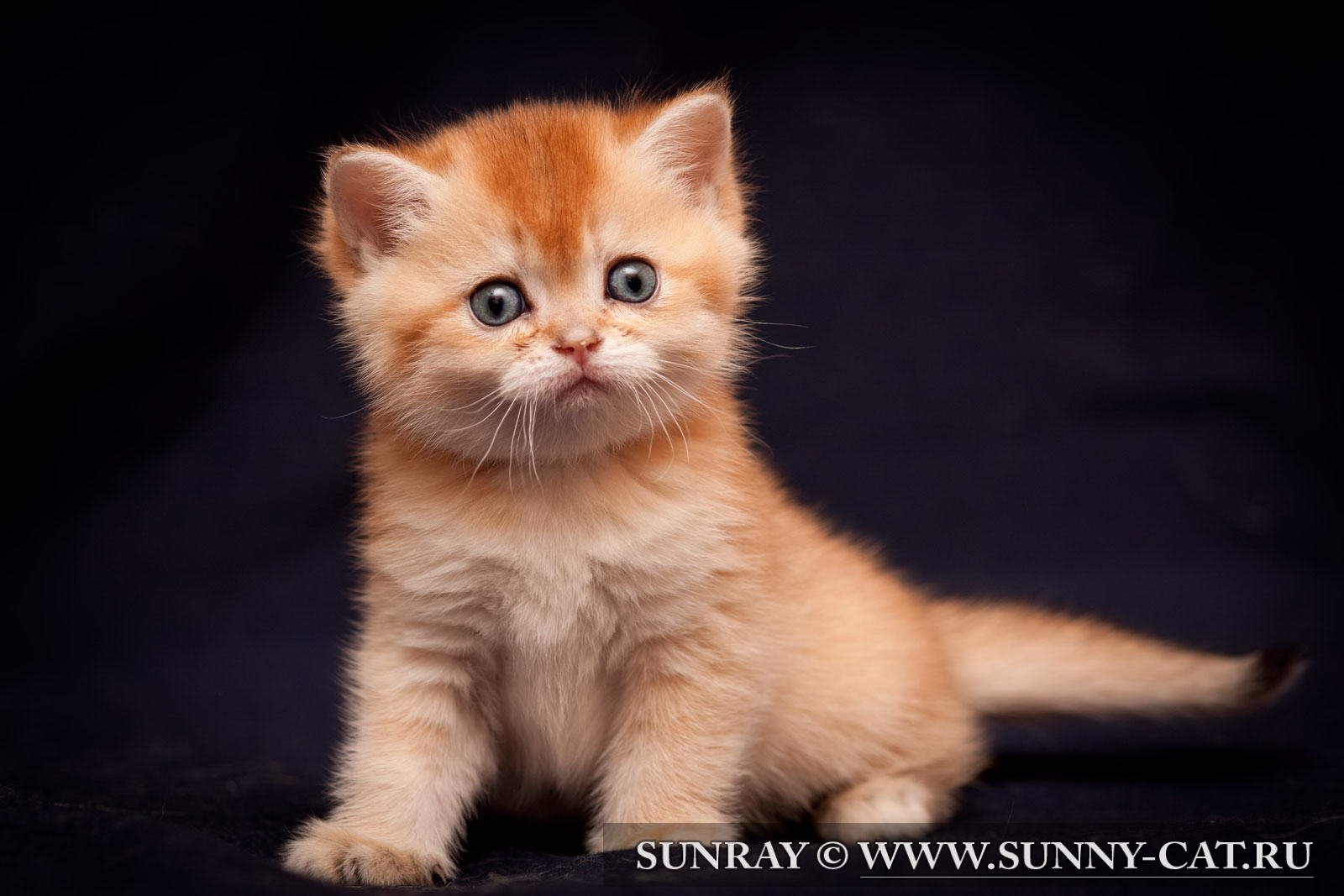 Кличка для кота мальчика на м
