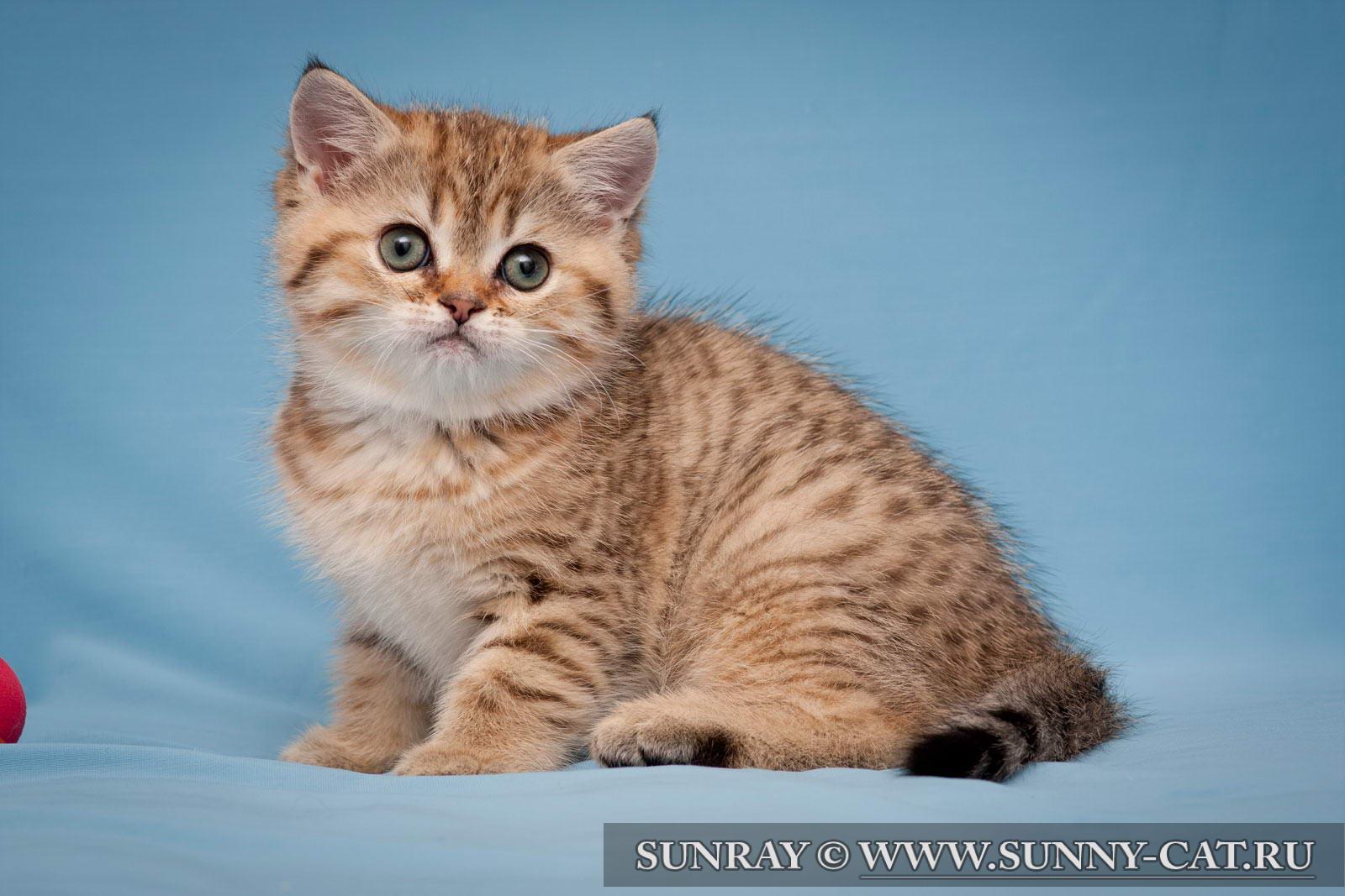 Котята 1 день