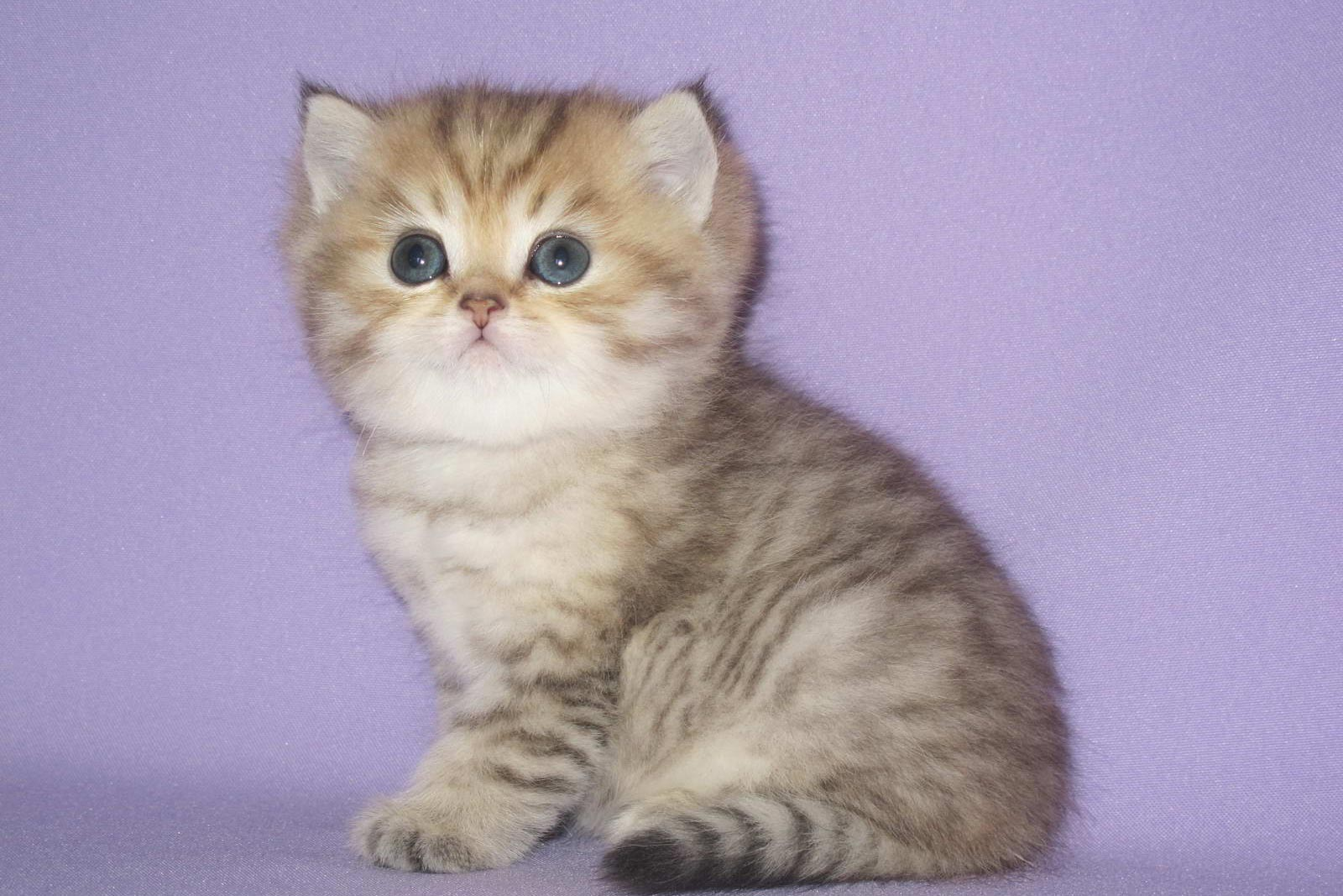Клички котов по-английски