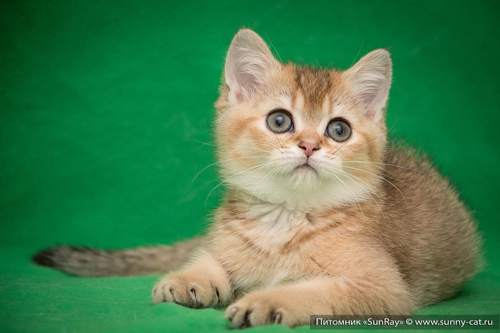 Рыжая cute sunny фото
