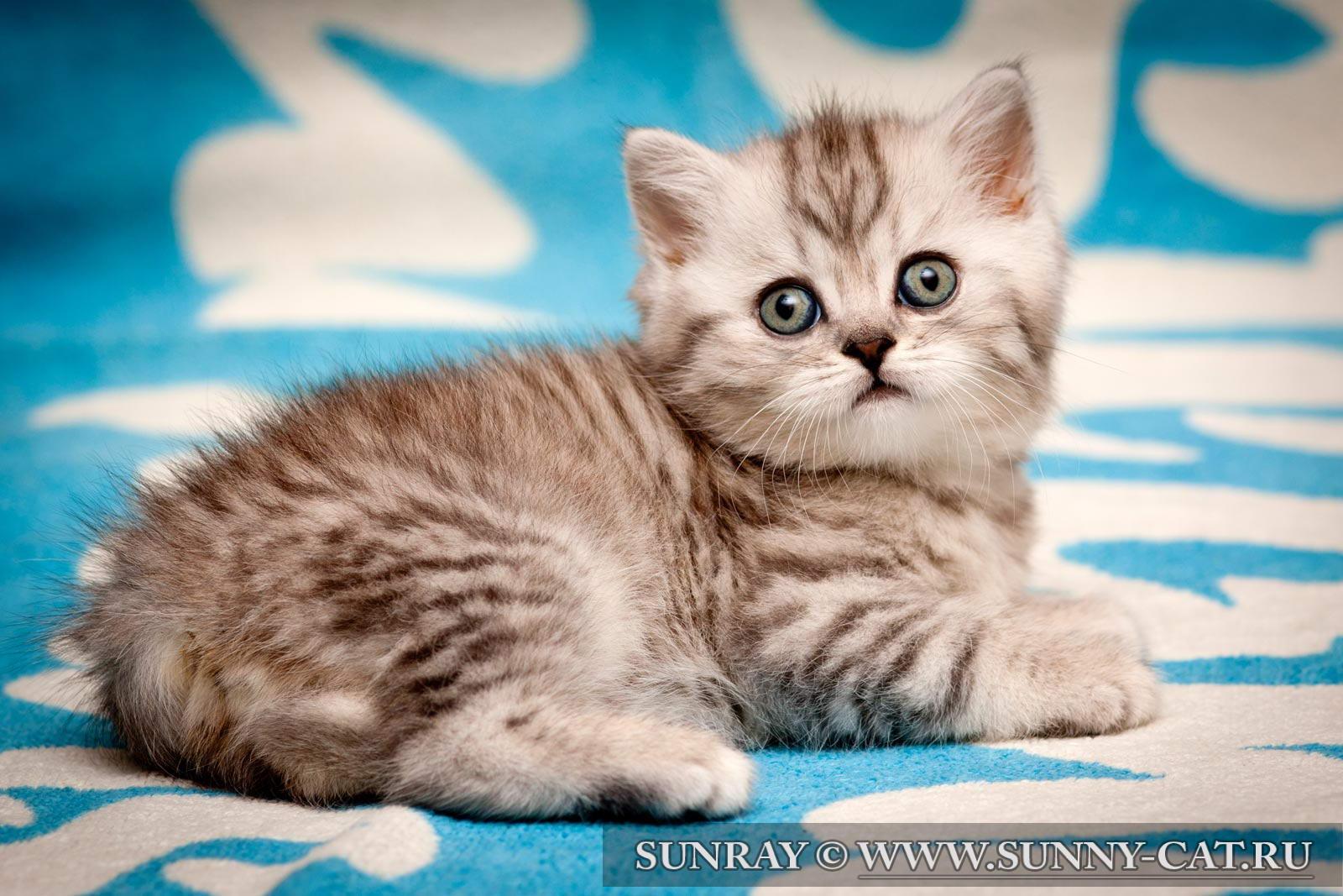 Плохие симптомы у котят   Кошка + Кот = Котенок