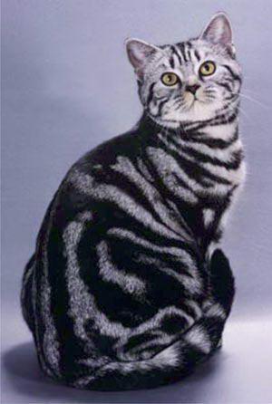 http://www.sunny-cat.ru/datas/users/1-color_design020.jpg