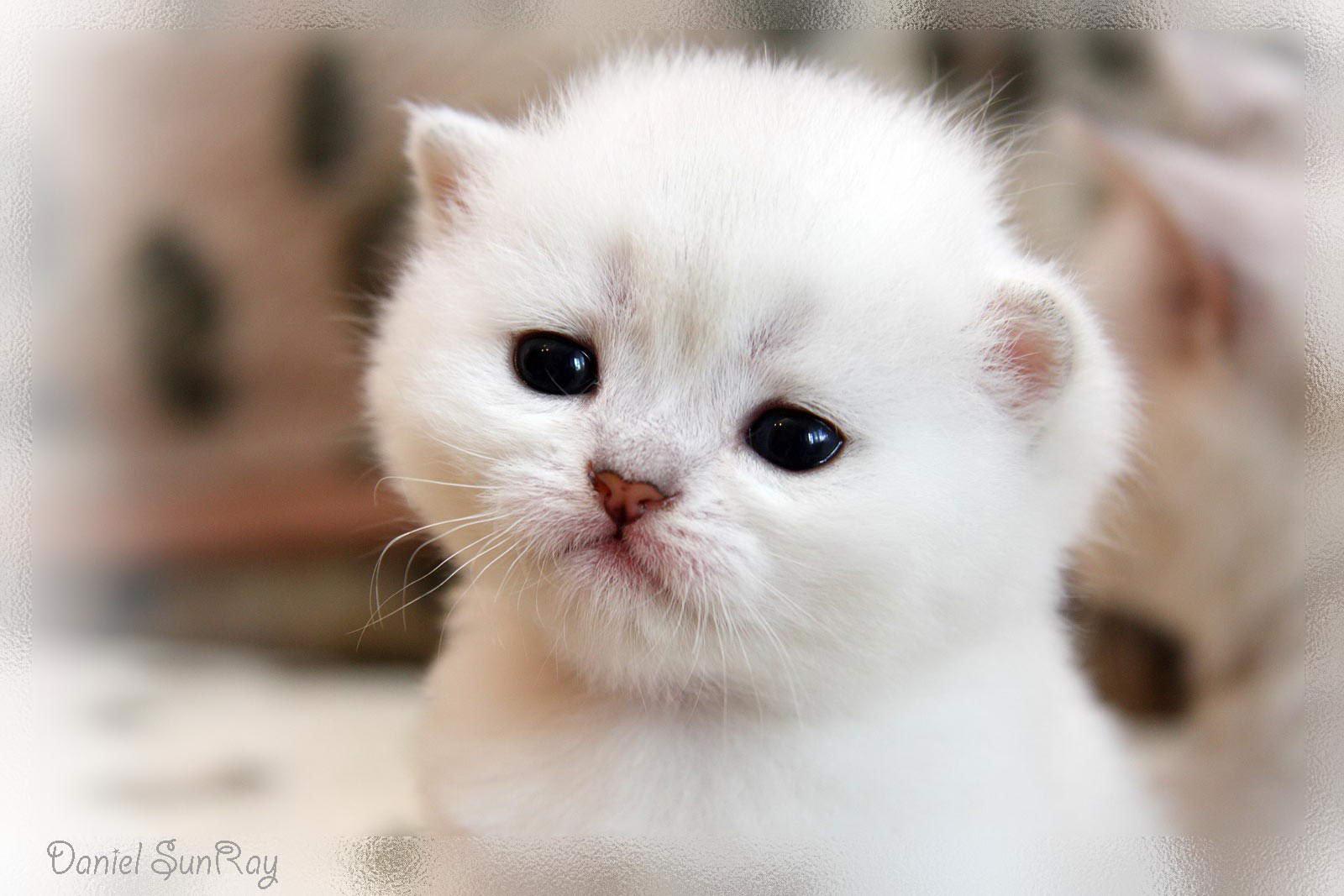 Картинки котята фото