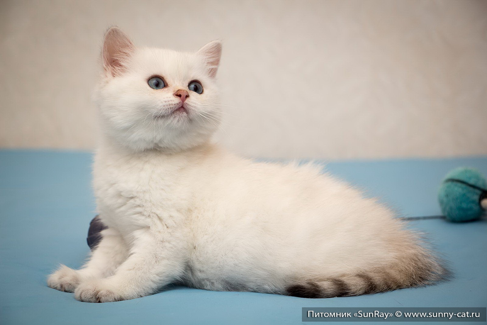 Как назвать кота по-английски