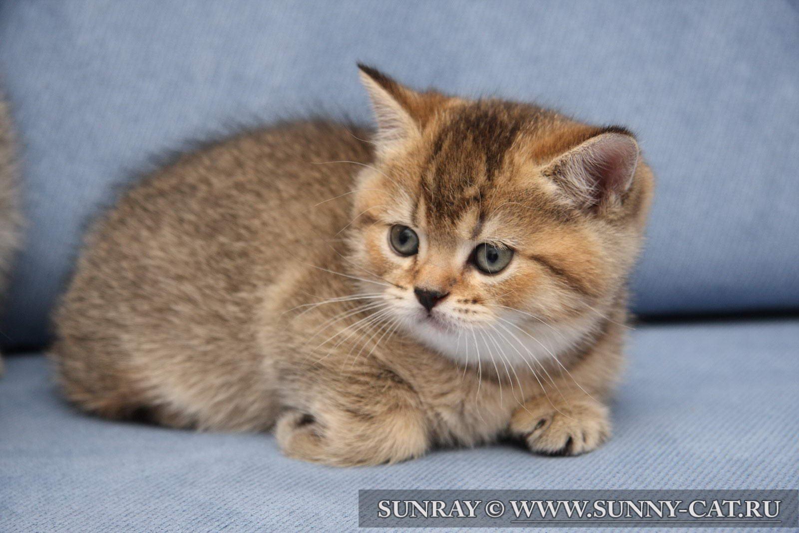 Что значит кот тикированный