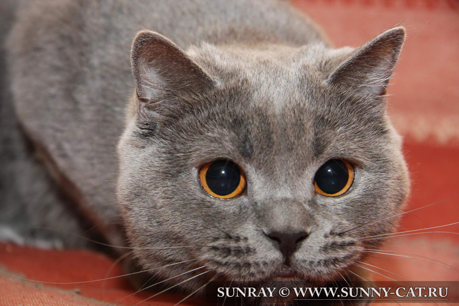 Глаза кошки зрение интересное о
