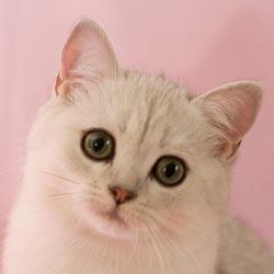 Правильно адаптируем котенка