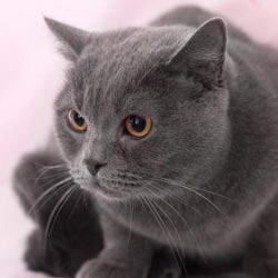 Как определиться в выборе кошки?