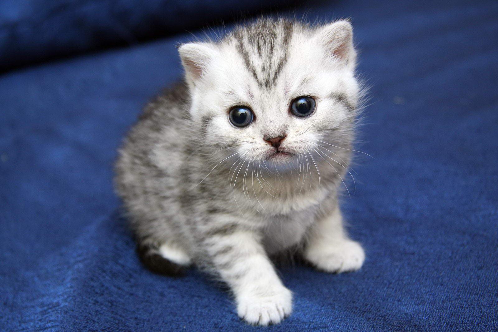 Кот и кошка - все о кошках и их хозяевах