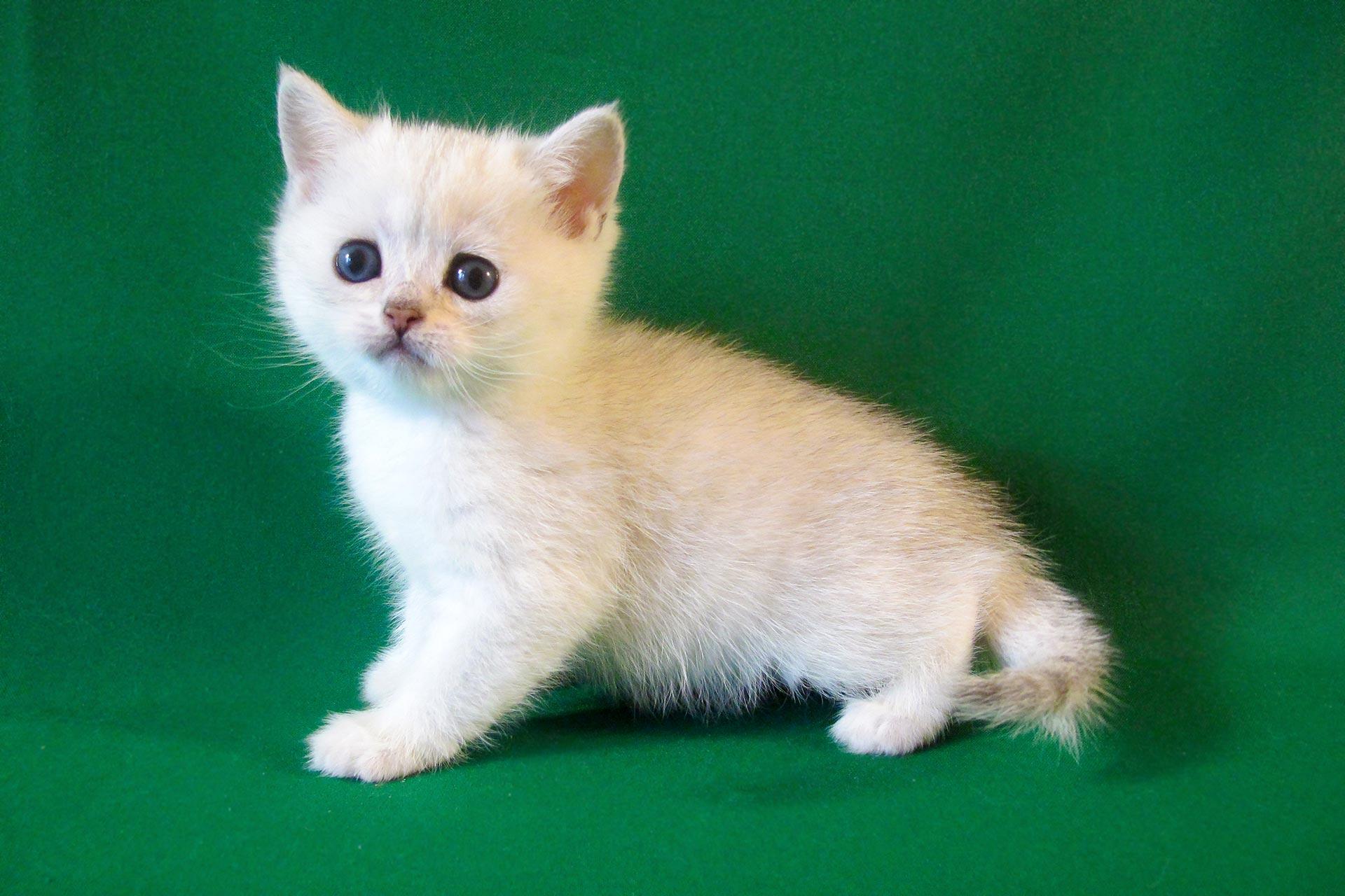 Trainer Fur Erwachsene Katzen Super Premium Trocken Gutes