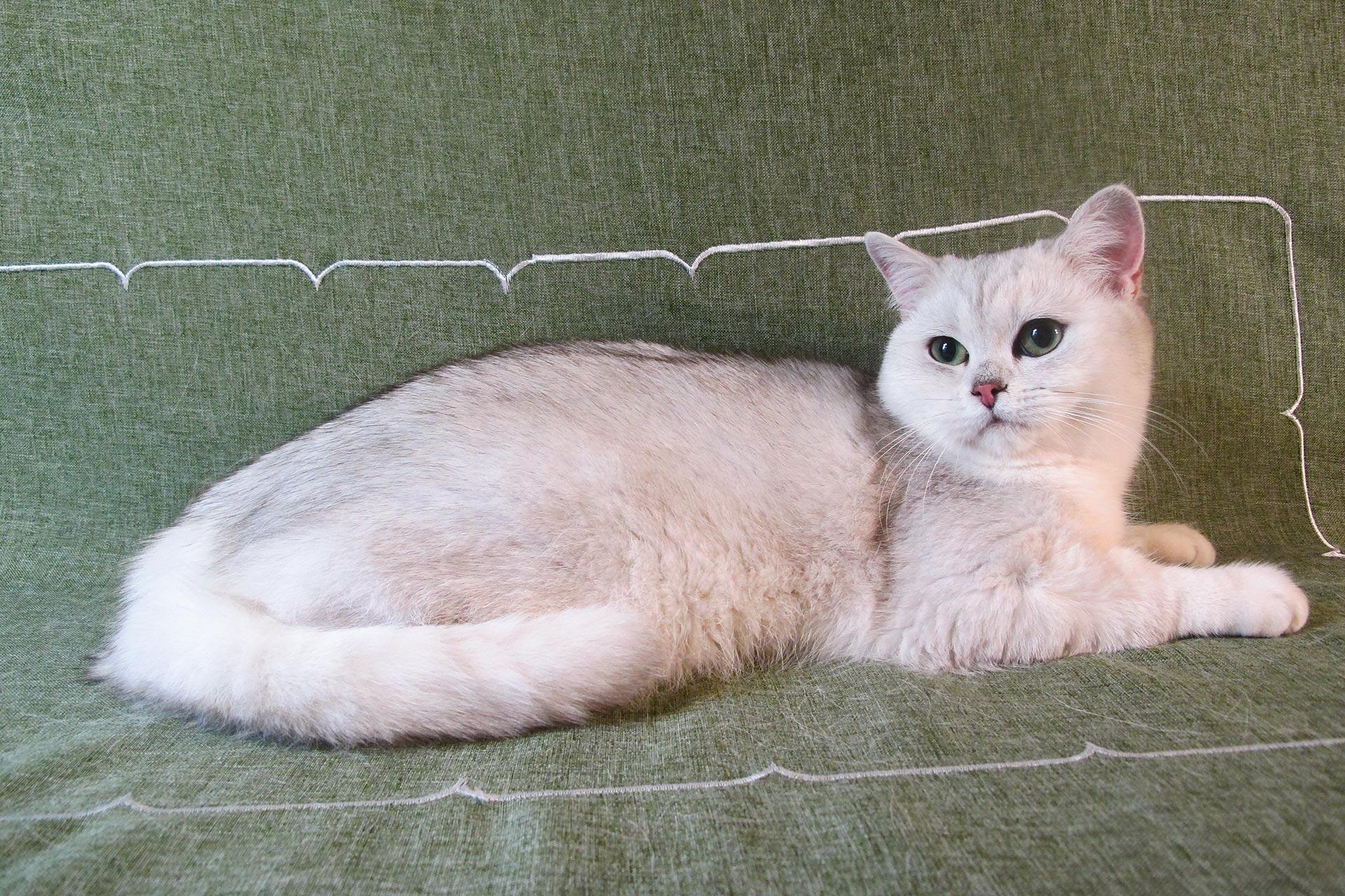 Корм для кошек Josera - Супер!!!!!!!!!!!!!   Отзывы