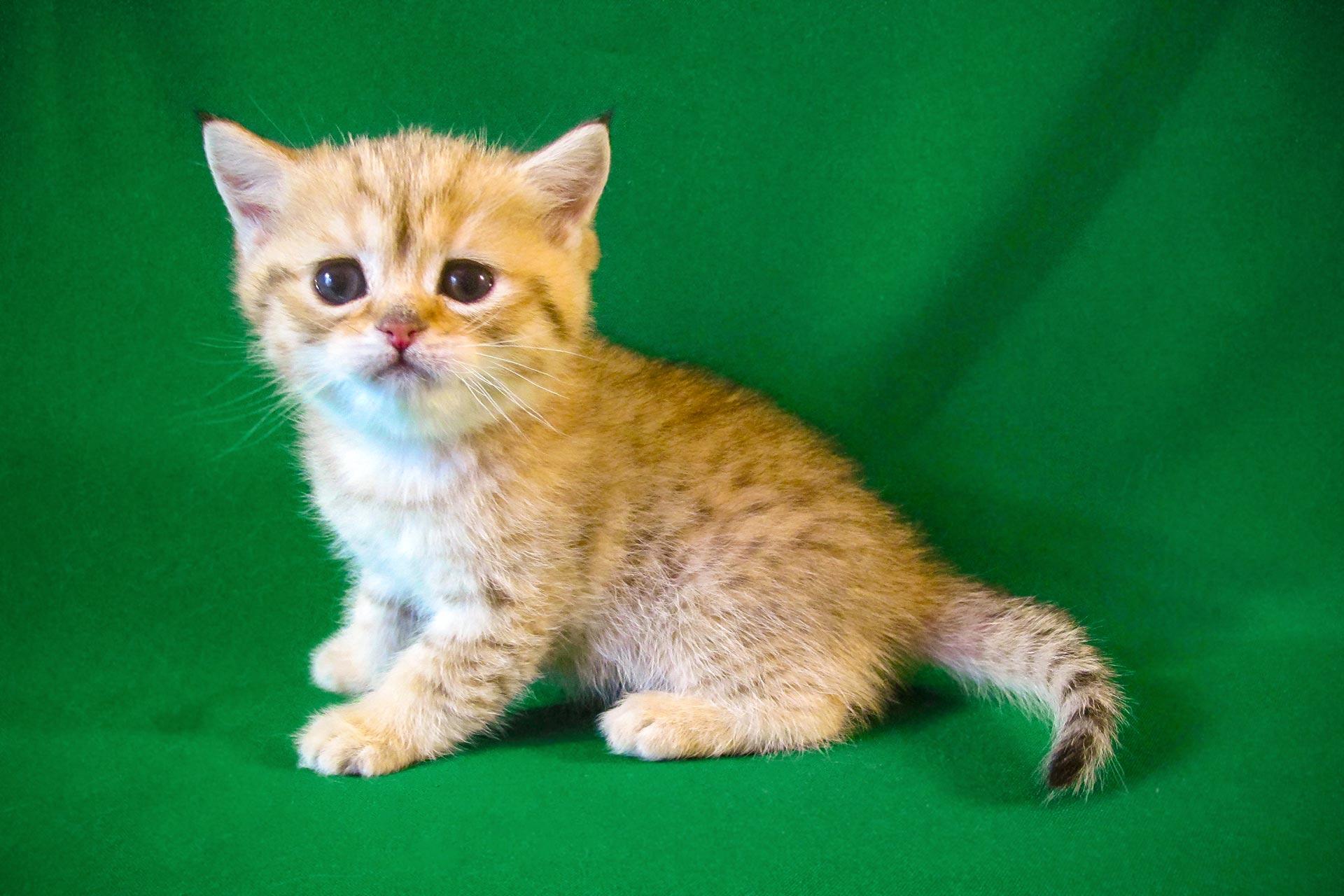 Orijen Fur Erwachsene Katzen Ganzheitlich Getreidefrei Trocken