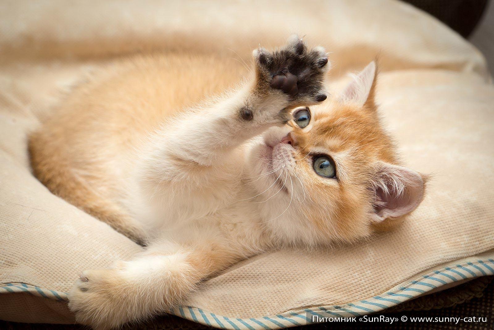 Имена котов рейтинг