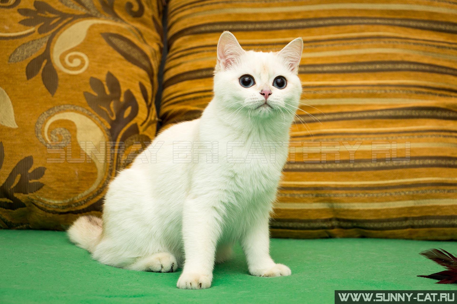 www sunny-cat ru