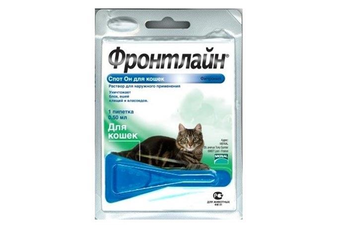 Подкожный клещ у кошек лечение в домашних условиях быстро