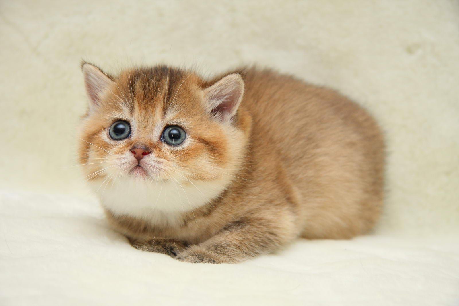 Сколько кошка может без кота