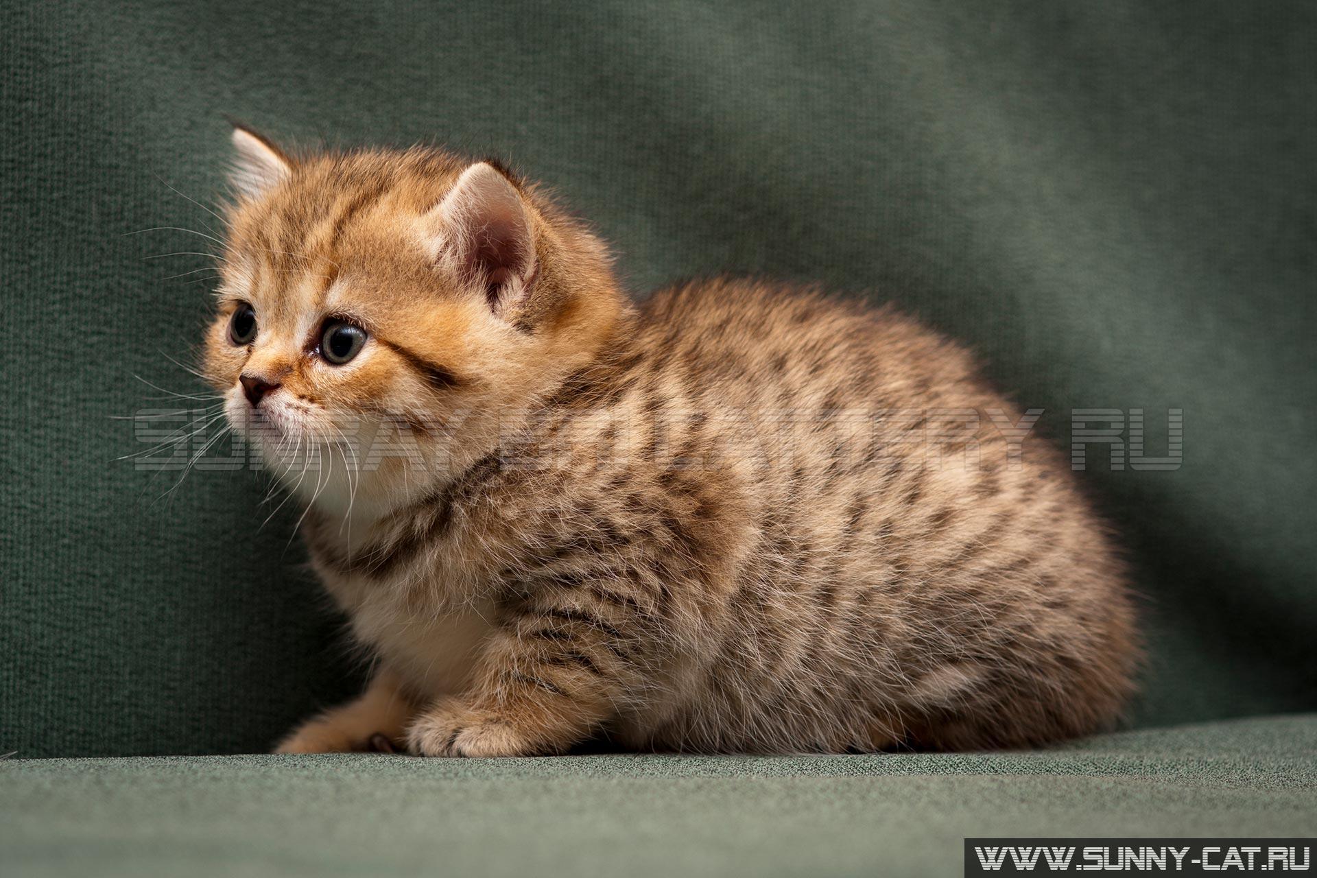 Обозначение кличек для котов