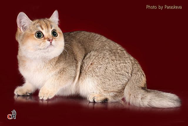 Клички рыжих котов русские