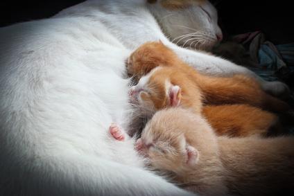 Почему кошка лапами мнет живот