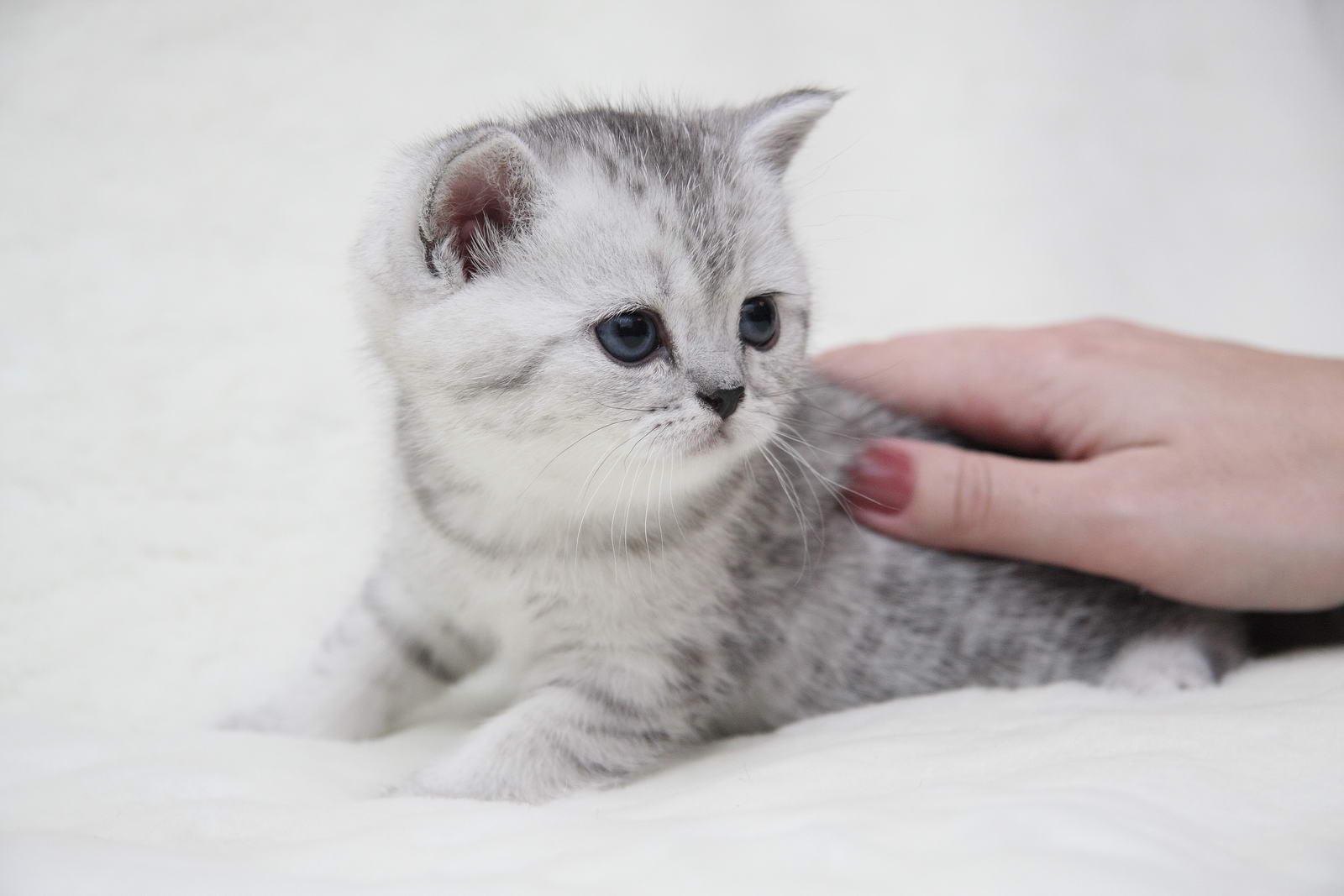 фото котенок вискас