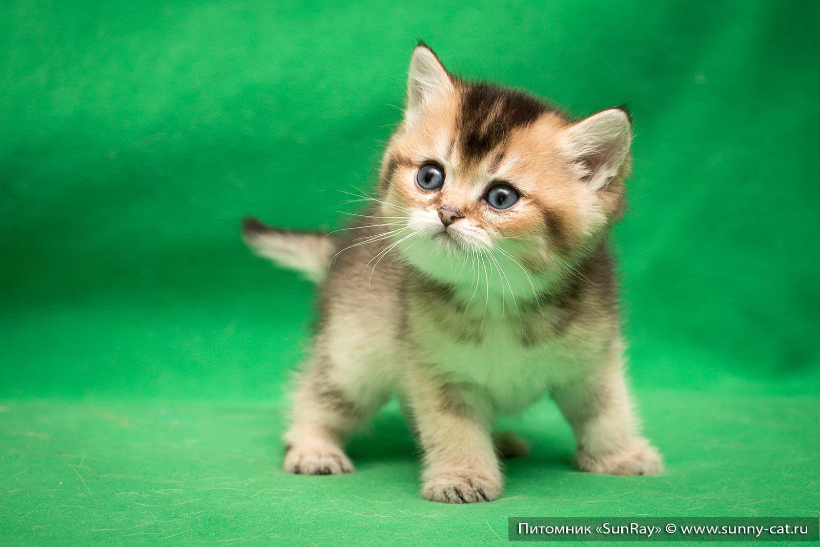 Прикольные русские клички для котов-мальчиков