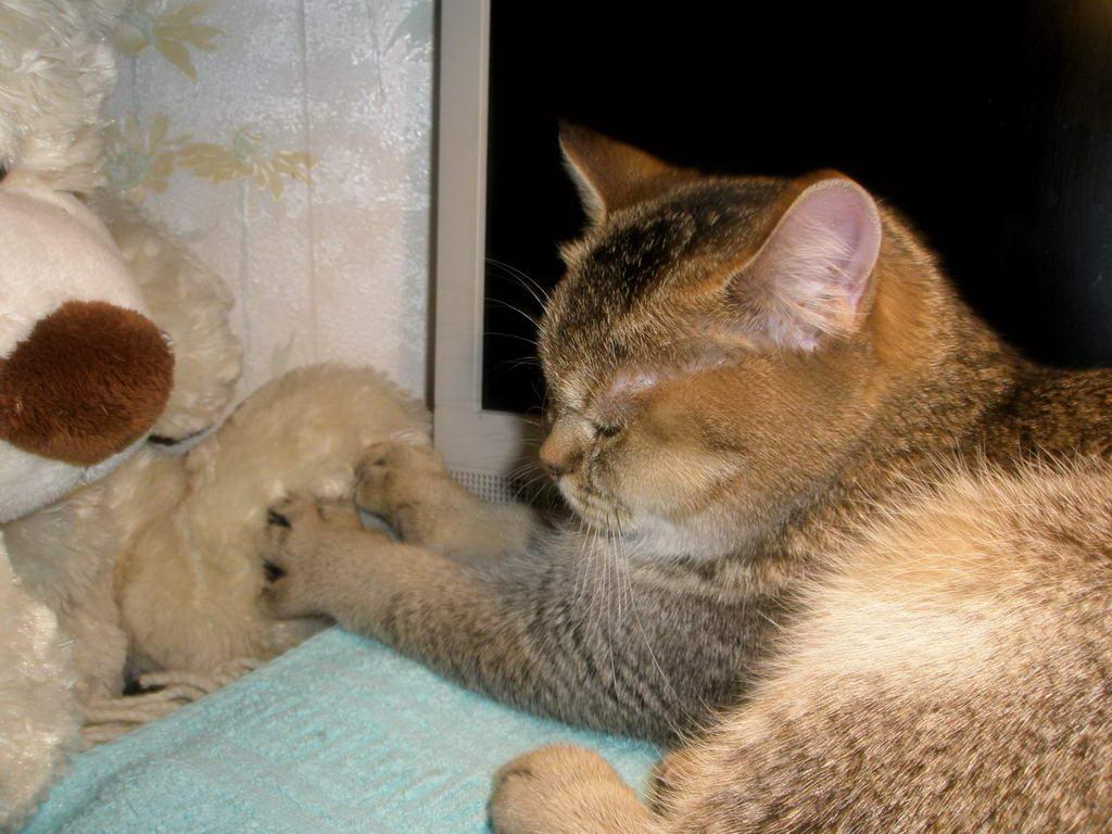Почему кот лапами мнет
