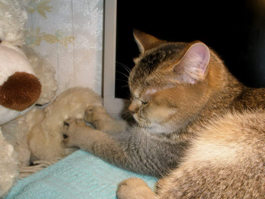 Шаг язык и зубы кошки усы кошки