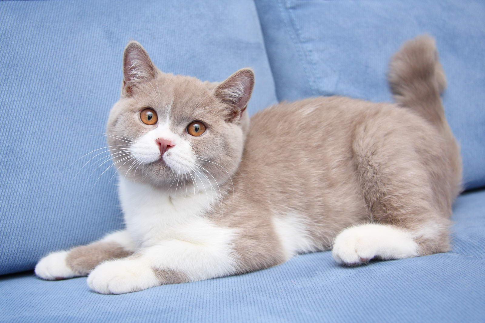 Генетика кошки